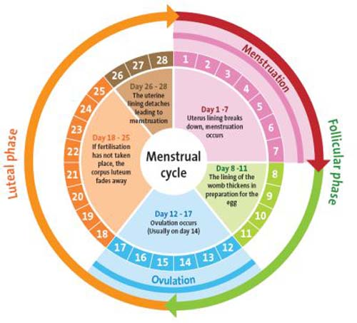 how to detect ovulation day